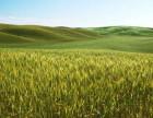优粮步骆出售健康绿色有机莜麦