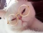 加菲猫6只,自家小可爱。