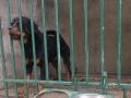 新生力 宠物训练 寄养 各种幼犬出售基地