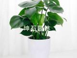 坤石园林专业提供植物租赁、植物出租生产,欢迎来电咨询:021