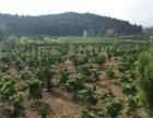 绵阳市梓潼县长卿镇中心村占地约60亩的农场出售