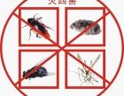 嘉兴专业-家庭灭鼠公司
