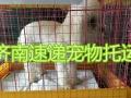 济南 烟台 青岛 直达航班宠物托运 随机带 单独飞