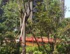 21小高端小区常绿林溪谷精装有证可按揭可直接过户即买即住