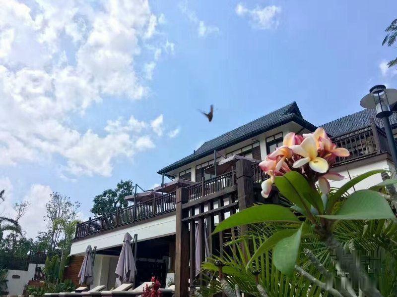 中国平安打造 悦景庄 被森林环绕的纯别墅 养身圣地