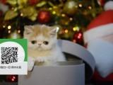徐州哪里有宠物店 徐州哪里卖宠物猫便宜 徐州加菲猫价格