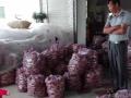 漳州六鳌红薯批发_漳浦六鳌地瓜批发