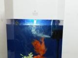 低价转让自家养的鹦鹉鱼带鱼缸