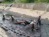 平湖公司专业环卫抽粪雨污管道疏通清洗本月一律优惠