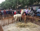 上海羊驼租赁浙江羊驼出租江苏租赁羊驼租羊驼特价
