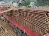 河北唐山长期供应园林绿化杉木杆,绿化竹竿