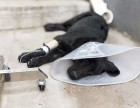 北京专业宠物医生上门出诊,犬猫绝育,打疫苗
