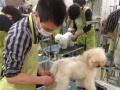 致力培养出色的宠物美容师,成就你美容师的梦想