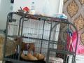 自取大型犬笼子不锈钢加粗加固易组装