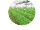 农产品质量安全追溯系统