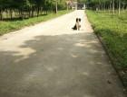 武汉哪里有靠谱的训练狗狗的位置