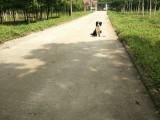武汉哪里有宠物训练