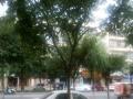 明珠广场旁旺铺出售 住宅底商 50平米