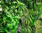 绿植墙植物墙仿真植物墙仿真绿植墙