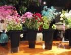 柠栀鲜花烘焙,小本投资也能撬动鲜花烘焙大市场