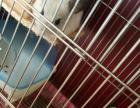 龙猫mm成年银斑