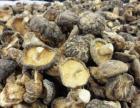湖北优质香菇