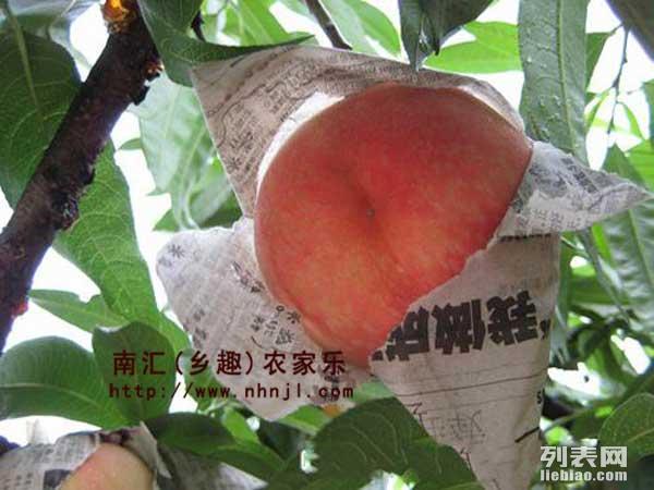 上海农家乐一日游推荐 吃土菜钓龙虾 采摘西瓜葡萄玉米