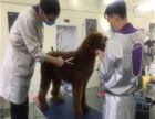 派多格宠物美容培训学校 包就业名师授课