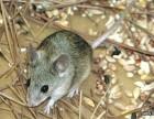烟台高新福山区食品厂 冷库专业灭鼠 防老鼠