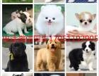 上门300一只明码标价中国最大狗场本地各类名犬 支持上门挑选