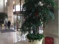 张江室内绿化植物销售 租摆 设计!免费送货上门