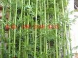 盛庭批发庭院仿真绿植盆景假竹子 3-4c