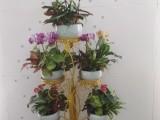 绿植租赁买卖 鲜花绿植 商场植物租摆 绿化养护