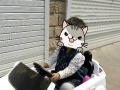 儿童四轮奥迪电动车  可遥控