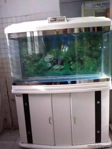 昆明鱼缸清洗 鱼缸造景 鱼缸维修 观赏鱼治疗 观赏鱼养护