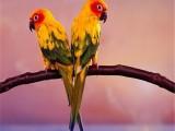 鄂尔多斯本地出售观赏鸟健康保障