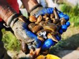 水蛭养殖 水蛭养殖技术 清水吊干水蛭回收
