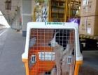 宠物犬活体托运空运汽运安全快捷价格