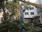 龙岗哪家修枝砍树公司较靠谱 修剪花卉绿化墙草坪 金速来专业