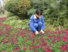 成都汇美园景提供小区工厂别墅庭院草坪修剪 树木绿化养护服务