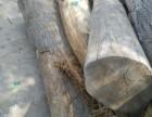 优质国槐桑木榆木苦楝木等原木