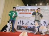 鄭州飛碟訓犬學校-10年來專注狗狗訓練