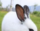 养殖兔子本小利大致富快