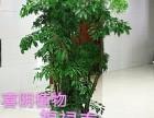 广州越秀植物租赁品种多样