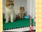 萌萌的宠物猫咪找新家