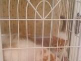 加菲猫 2000元