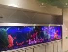 专业鱼缸养护服务、实体店面 售后服务安全有保障!