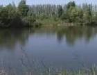 出租大洼土地,鱼塘,房屋,及院子。