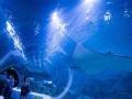 芜湖新华联大白鲸海洋公园-鸠兹关古镇一日游