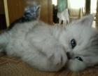 自家养的猫生的小猫